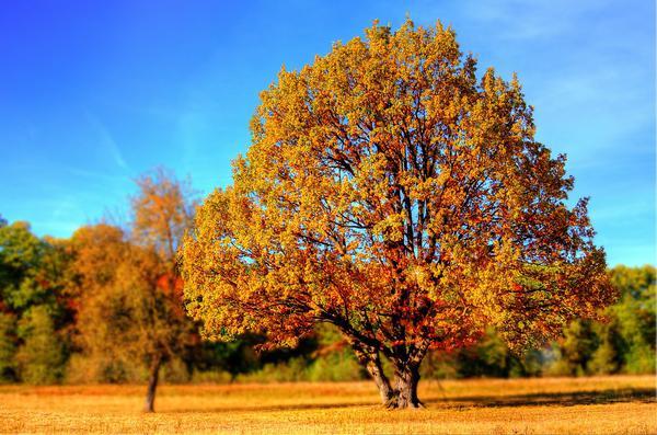 Ważne procesy pielęgnacji drzew