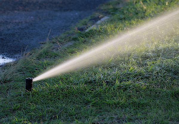 Skuteczne systemy nawadniania roślin
