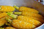 Odpowiednia uprawa kukurydzy