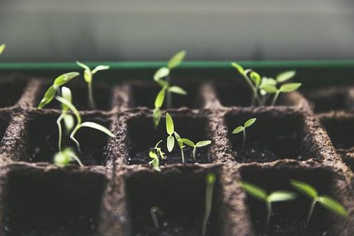 Czy warto kupić lampę do hodowli roślin?