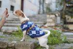 Po co kupować ubranka dla psa?