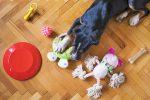 Praktyczne akcesoria dla psa