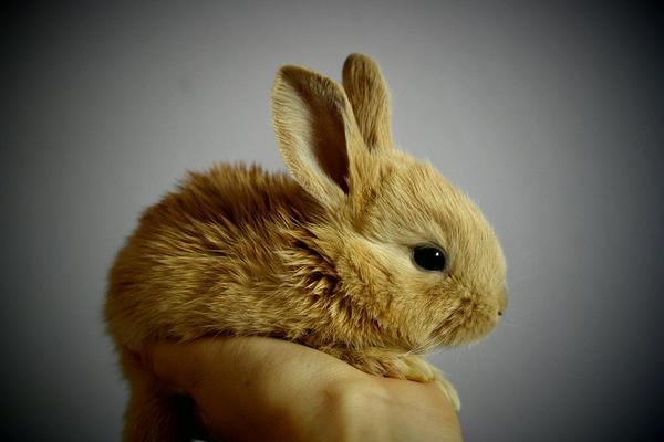 mieszanki ziół dla królików