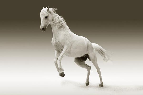 suplementy na stawy dla koni